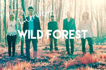 Spinning Gold – An Interview with Wild Forest